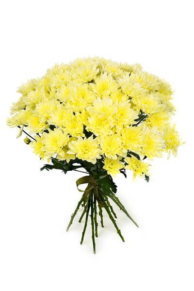 Хризантема Балтика желтая